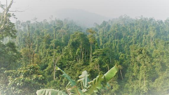 """Quảng Bình: Giám đốc rừng phòng hộ """"mất tích"""""""