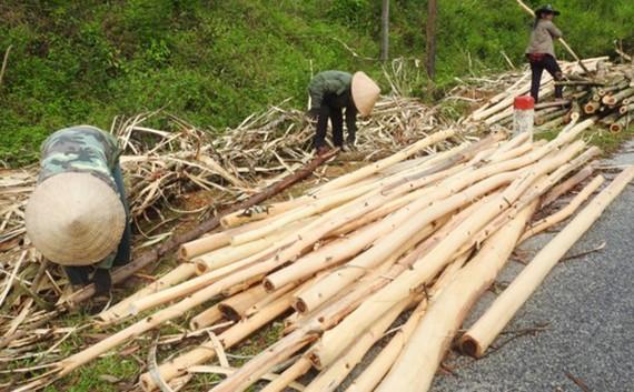 Người dân rơi vào cảnh khó khăn sau khi cơn bão số 10 quét qua.