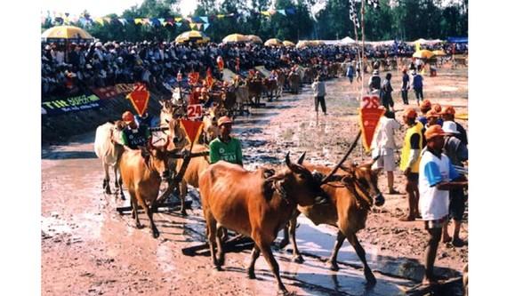 Lễ hội đua bò ở An Giang hàng năm thu hút đông đảo du khách đến vui chơi, giải trí