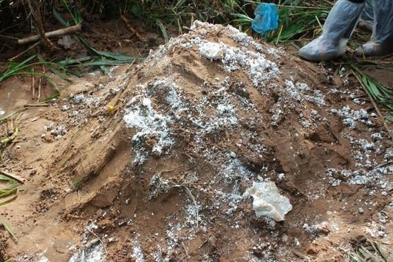 Ngành chức năng Cần Thơ chôn heo chết gần khu dân cư làm người dân lo lắng