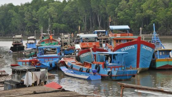 Tàu đậu tránh bão tại huyện Cần Giờ. Ảnh: CAO THĂNG