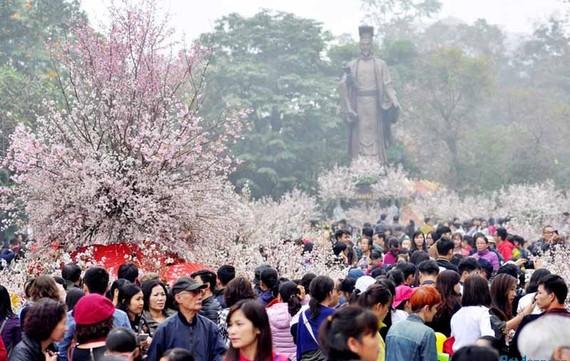 100 cây hoa anh đào sẽ khoe sắc tại Hà Nội trong tháng 3