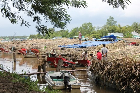 Vi Thanh Sugar Refinery halts operation due to a shortage of sugarcanes. (Photo: SGGP)
