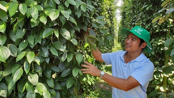 Ministry discusses way to increase value for pepper products