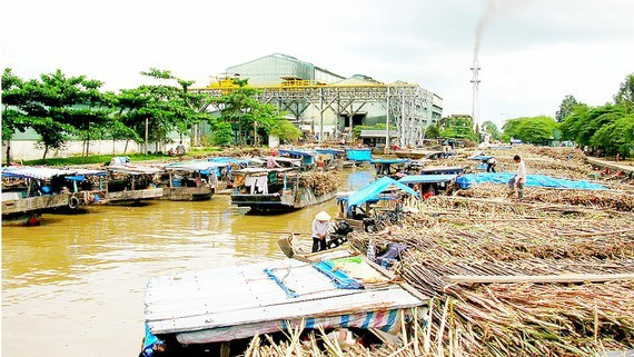 Many sugar refinery plants go bankrupt. (Photo: SGGP)