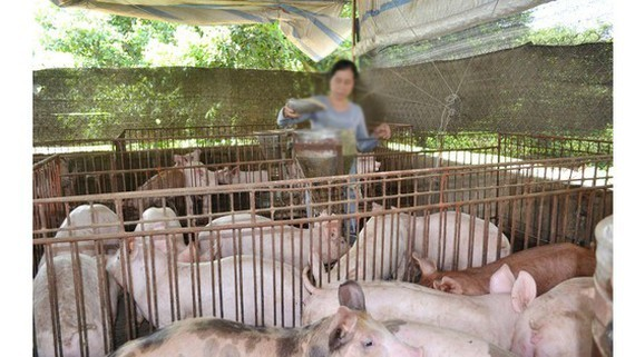 Total pig herd in Dong Nai Province drops by 40 percent