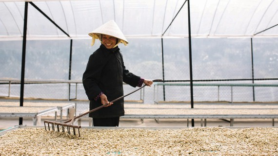 Coffee is one of products that are consumed heavily by Korean people. (Photo: SGGP)