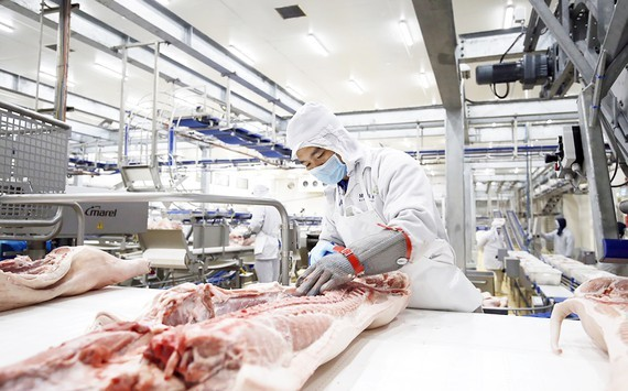 Masan MEATLife Joint Stock Company has been building a complex to process clean pork in Long An Province to serve the Southern market. (Photo: SGGP)