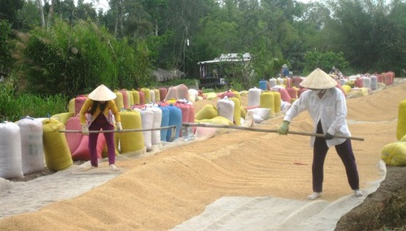Mekong Delta provinces expect good summer-autumn rice crop