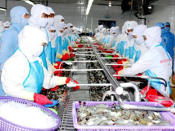 Shrimp processing at an enterprise in Ca Mau Province. (Photo: SGGP)