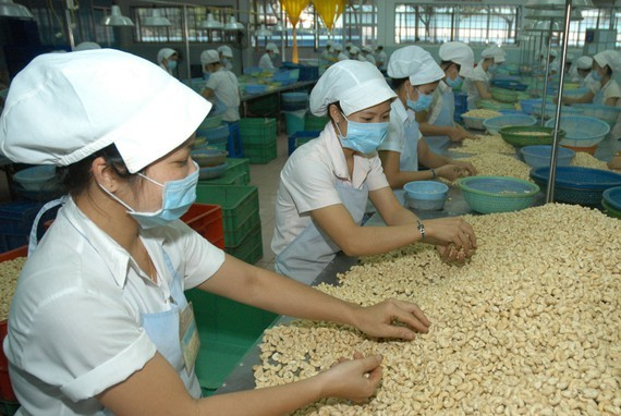 Workers process cashew nuts in Binh Phuoc Province. (Photo: SGGP)