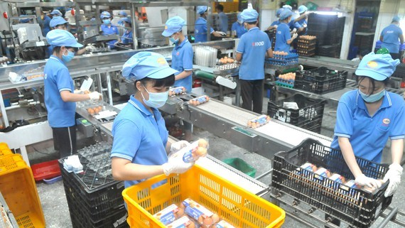 Poultry egg production at Vinh Thanh Dat Company. (Photo: SGGP)