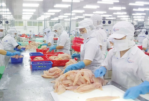 Workers process pangasius fish for export at a company in the Mekong Delta. (Photo: SGGP)
