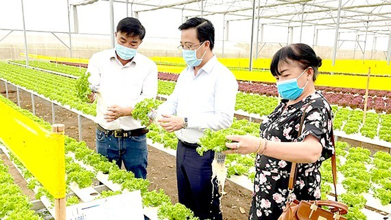Leaders of the Department of Industry and Trade of Ho Chi Minh City visit a hydroponic lettuce farm in Lam Dong Province. (Photo: SGGP)