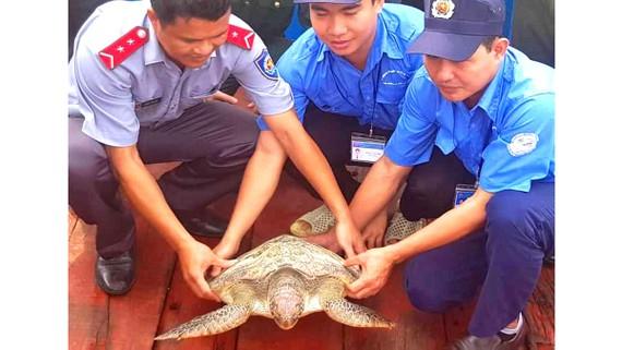 Thả cá thể rùa biển quý hiếm về môi trường tự nhiên