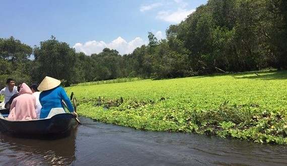 Tra Su cajuput forest in An Giang  (Photo: KK)