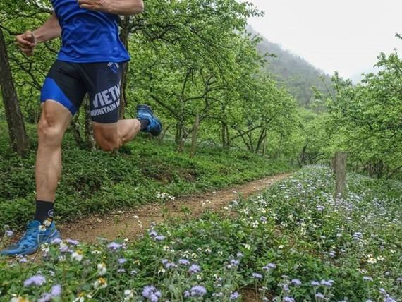 Vietnam Trail Marathon in Moc Chau to draw 1,900 runners