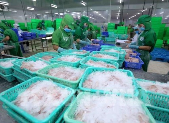 A production line of tra fish (pangasius) for export in Dong Thap province (Photo: VNA)