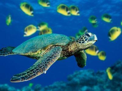 Program to promote conservation of endangered sea turtles