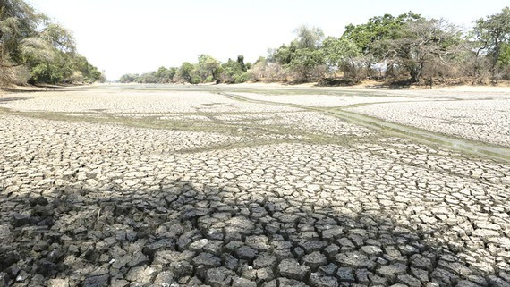 Drought occurs everywhere in the country because of climate change. (Photo: Sggp)