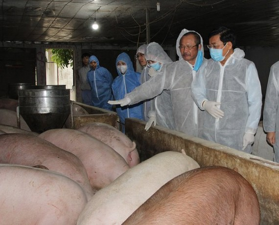 Minister of Agriculture and Rural Development Nguyen Xuan Cuong leads a delegation to visit a pig farm in Phu Tho Province.