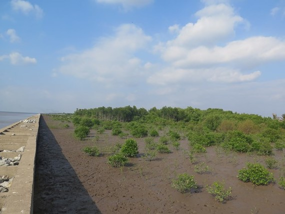 A mangrove forest in the southernmost province of Ca Mau (Photo: AFD)
