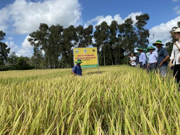 Ông Ngô Văn Đông (Tổng Giám đốc Công ty Cổ phần Phân bón Bình Điền): Quan trọng nhất là giúp bà con nông dân yên tâm sản xuất ảnh 1
