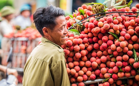 Lần đầu tiên vải thiều Việt Nam đi châu Âu theo hiệp định EVFTA