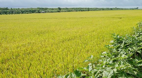 Chậm ban hành kết luận thanh tra, UBND huyện U Minh (Cà Mau) bị phê bình ảnh 1