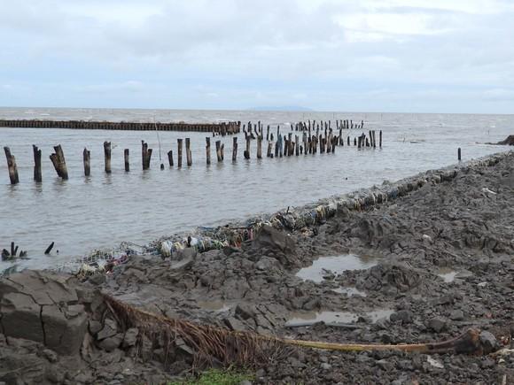 Cà Mau quyết định tình huống khẩn cấp đối với 5 đoạn sạt lở đê biển Tây ảnh 1