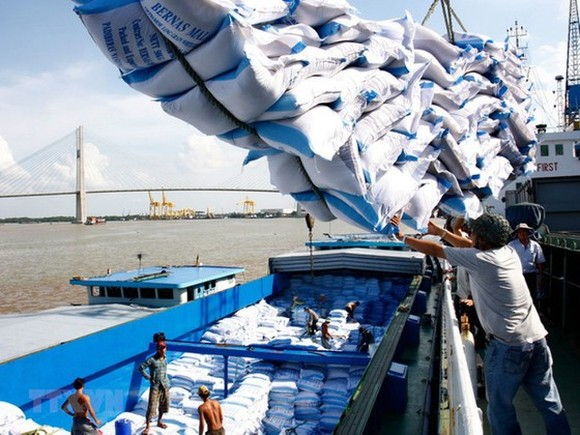 Rice export declines in September (Photo: SGGP)