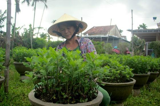 Growers in Central Vietnam restore ornamental flower after flood for Tet market