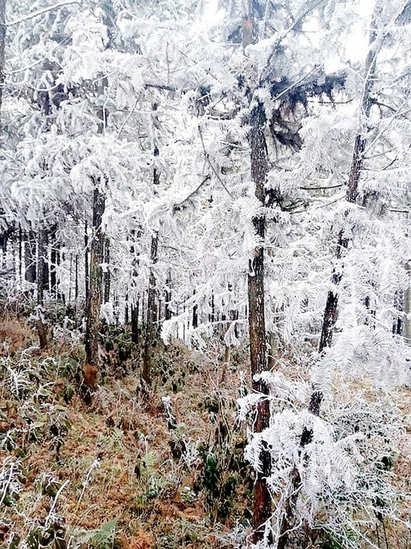 Northern provinces continue to suffer from long-lasting chilly cold snap