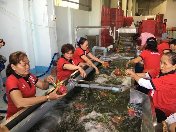 Nông sản Việt Nam xuất khẩu tăng mạnh nhờ tiếp cận thị trường 2,2 tỷ người ảnh 1