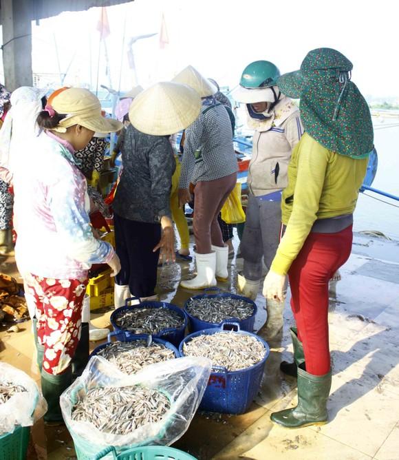 Ngư dân Quảng Ngãi vui mùa cá cơm đến sớm ảnh 7