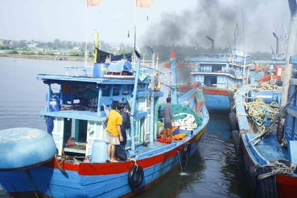 Ngư dân Quảng Ngãi vui mùa cá cơm đến sớm ảnh 11