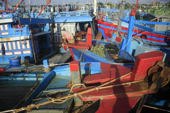 Tàu cá bị mắc kẹt giữa âu thuyền ở Quảng Ngãi ảnh 1