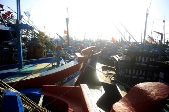 Tàu cá bị mắc kẹt giữa âu thuyền ở Quảng Ngãi ảnh 4