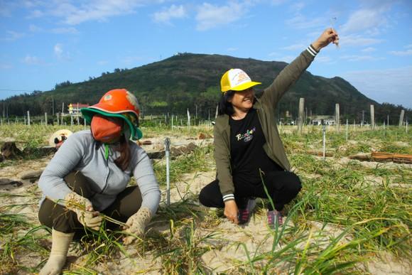 Mùa thu hoạch tỏi trên đảo Lý Sơn ảnh 5
