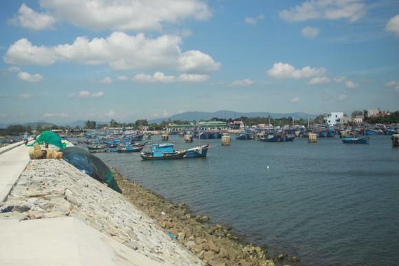 Quảng Ngãi khẩn cấp gia cố đê ở các cảng neo trú tàu thuyền trước mùa mưa bão ảnh 1
