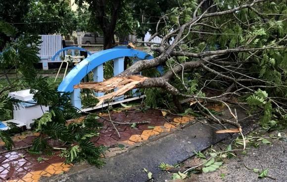 Quảng Ngãi: 9 người bị thương, hàng chục hecta đất canh tác bị thiệt hại sau bão số 6 ảnh 3