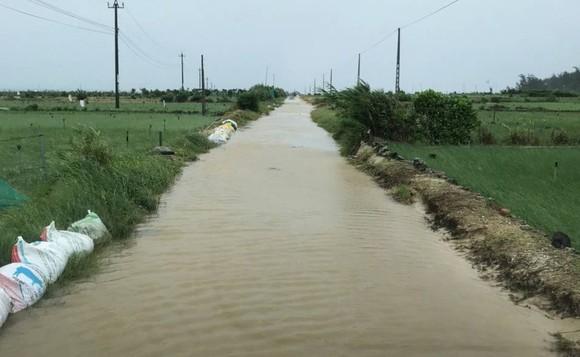 Quảng Ngãi: 9 người bị thương, hàng chục hecta đất canh tác bị thiệt hại sau bão số 6 ảnh 2