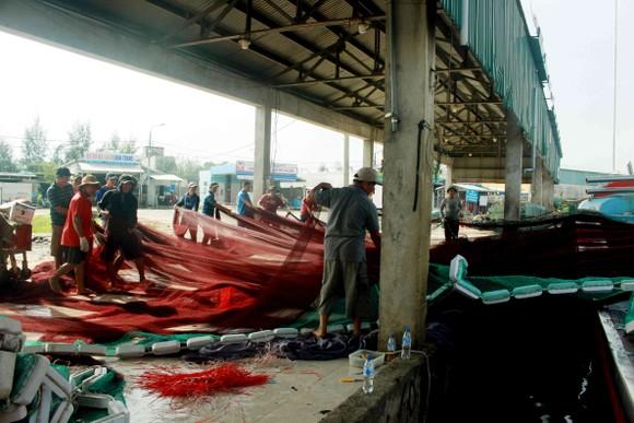 Sau bão số 6, ngư dân Quảng Ngãi tranh thủ đánh bắt ven bờ ảnh 7