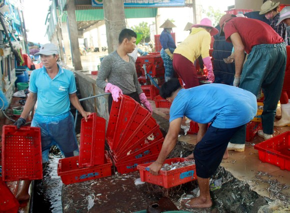 Sau bão số 6, ngư dân Quảng Ngãi tranh thủ đánh bắt ven bờ ảnh 3