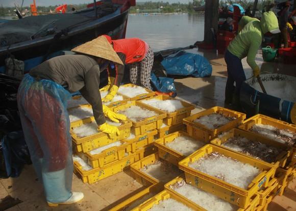 Sau bão số 6, ngư dân Quảng Ngãi tranh thủ đánh bắt ven bờ ảnh 4