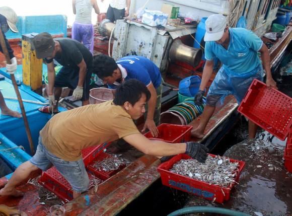 Sau bão số 6, ngư dân Quảng Ngãi tranh thủ đánh bắt ven bờ ảnh 1