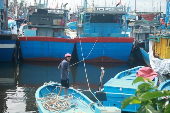 Quảng Ngãi khẩn trương neo trú tàu thuyền tránh trú bão số 9  ảnh 1