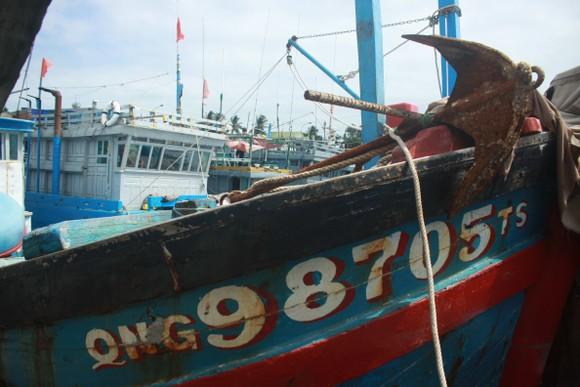 Quảng Ngãi khẩn trương neo trú tàu thuyền tránh trú bão số 9  ảnh 6
