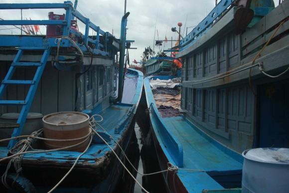 Quảng Ngãi khẩn trương neo trú tàu thuyền tránh trú bão số 9  ảnh 7