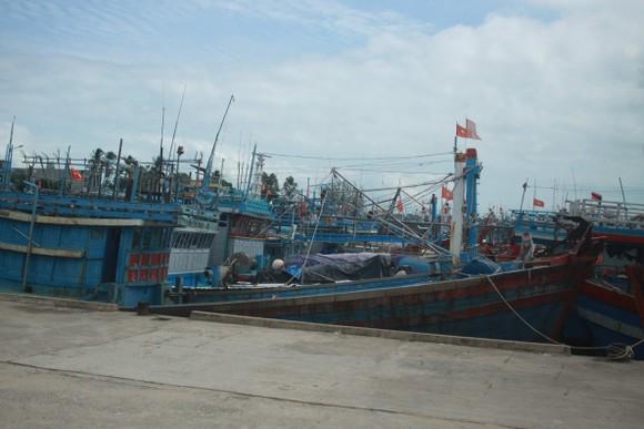 Quảng Ngãi khẩn trương neo trú tàu thuyền tránh trú bão số 9  ảnh 10